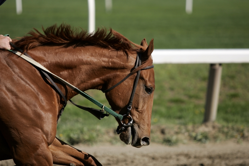 Who knows? Your horse could be the next racing legend.